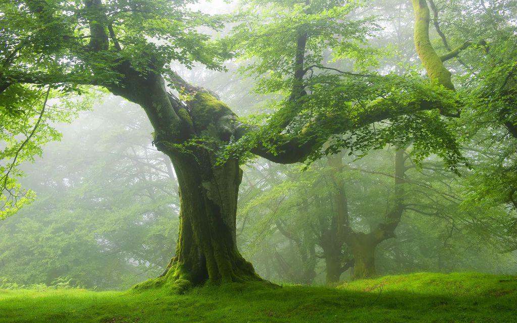 奇樹2014-0020