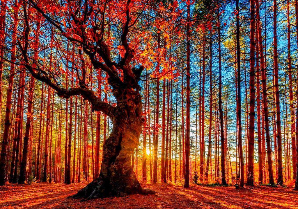 奇樹2014-0022