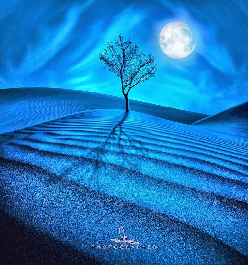 奇樹2014-0024