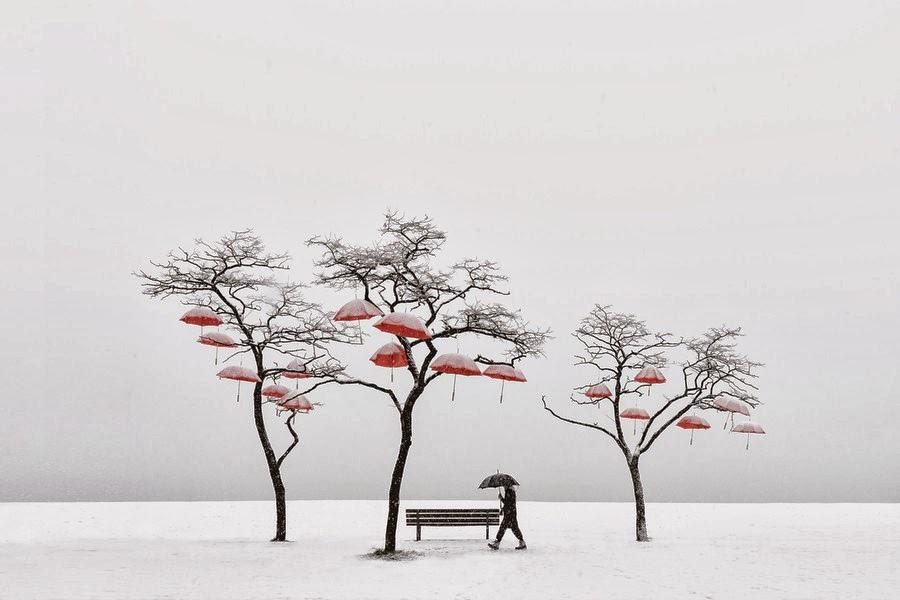 奇樹2014-0027