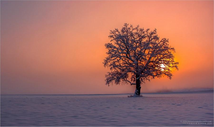 奇樹2014-0025