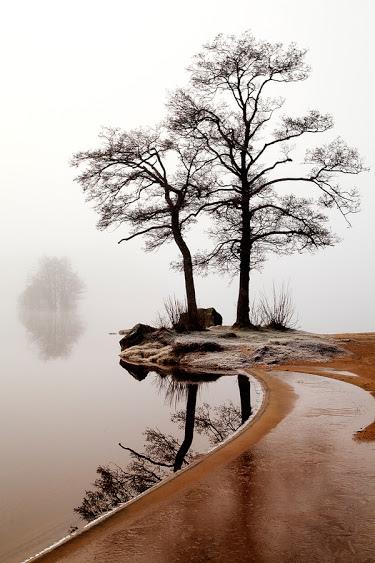 奇樹2014-0053