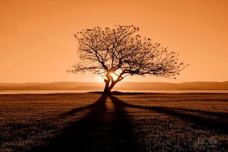 奇樹2014-0051