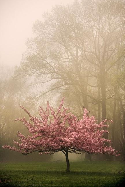 奇樹2014-0050