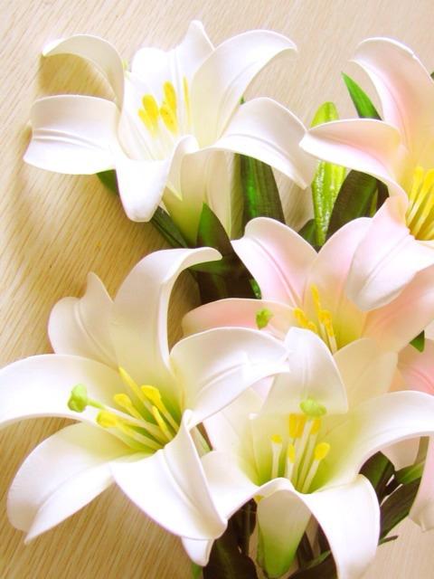 flower221_20140109_Sandy Bunnagang