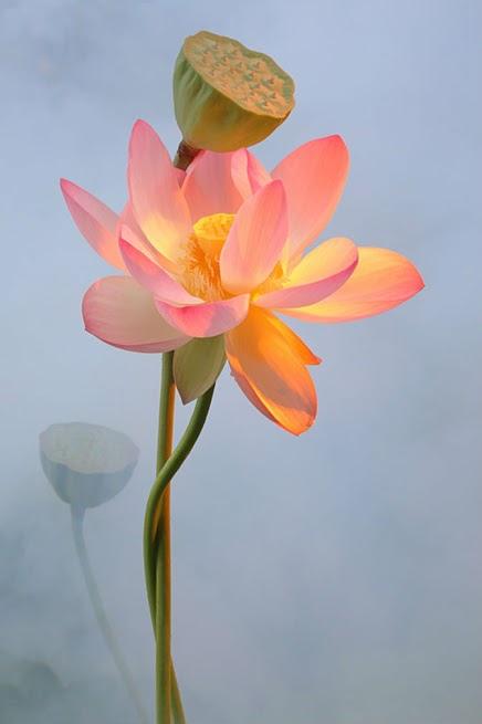 flower223_20131220_凌峰
