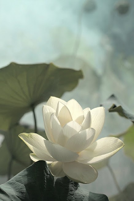 flower222_20131220_凌峰