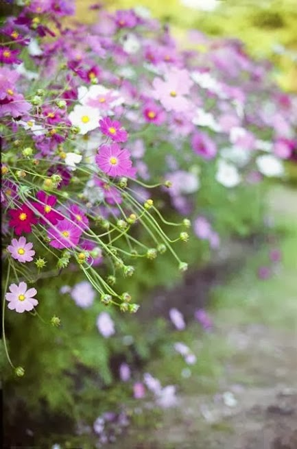 flower220_20140109_Kou Kitajima