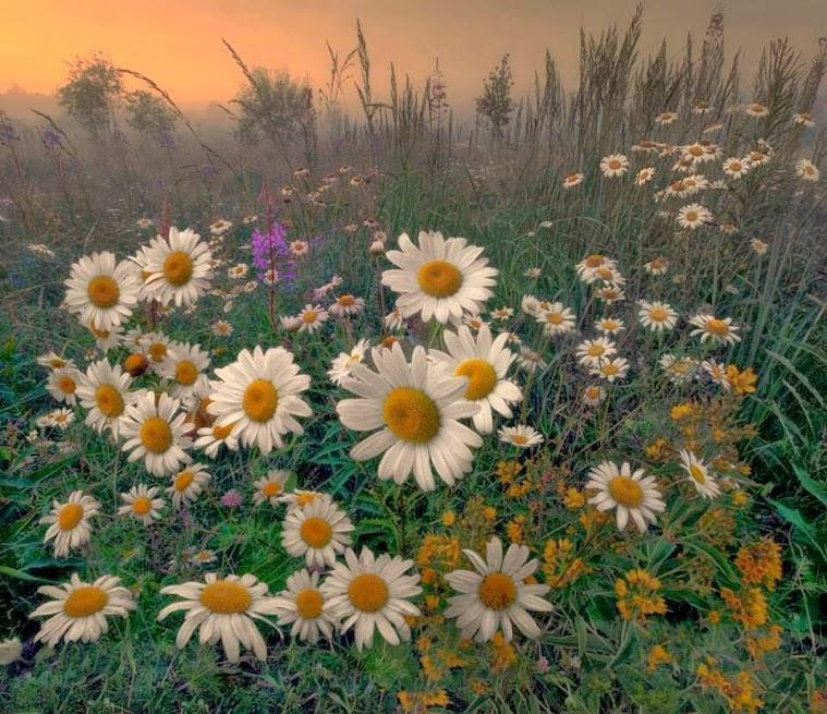 flower225_20130728_dimka angelova