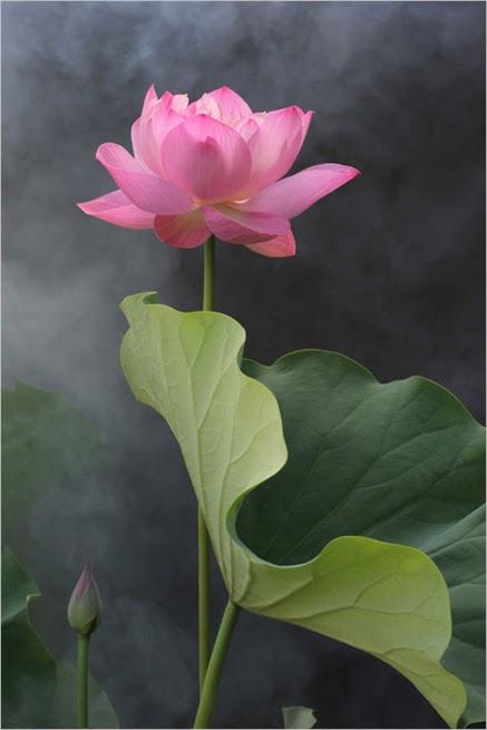 flower224_20131220_凌峰