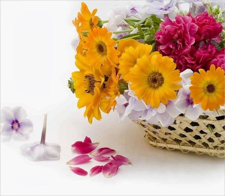 flower226_20140111_Madalina Radu