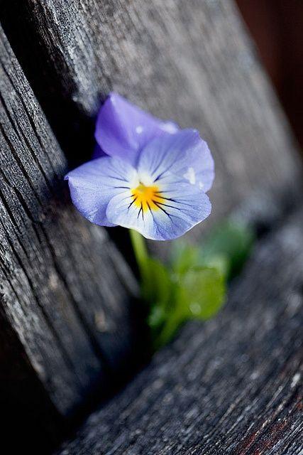 flower394_20140731