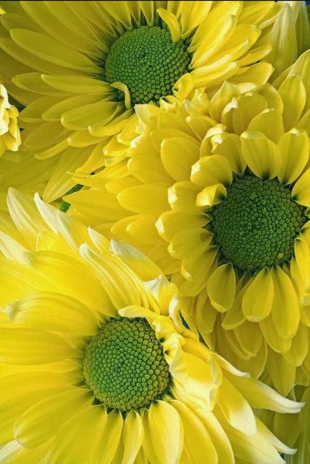 flower395_20140731