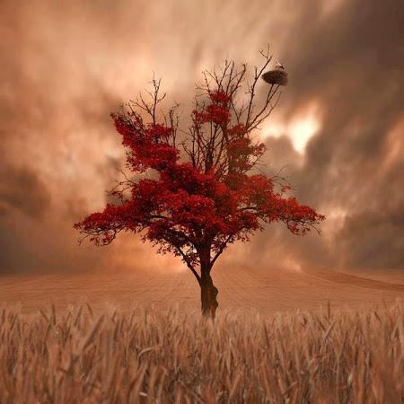 奇樹2014-0056