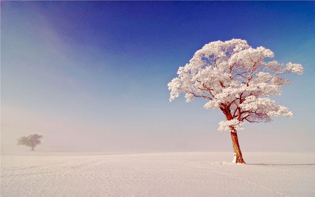 奇樹2014-0061
