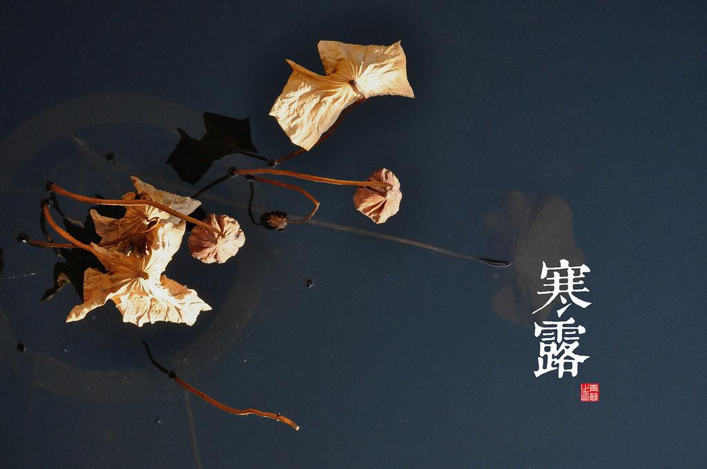 二十四节气 2011-10-16 9-08-20.瀵掗湶