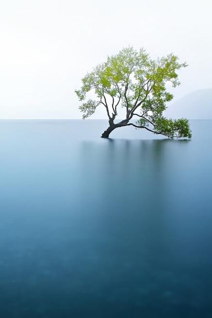 奇樹2014-0064