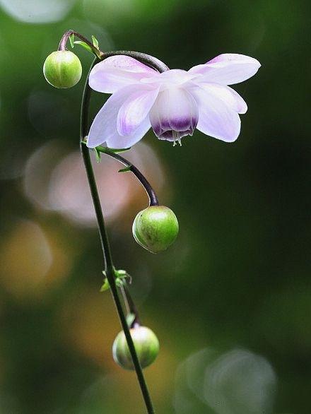 flower468_20141020