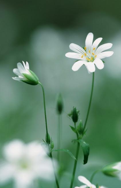 flower285_20140315_PRAVEEN OBEROI