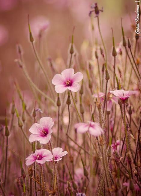 flower288_20140328_Ali Kandemir