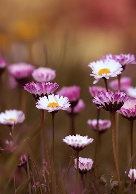 flower284_20140313_Ali Kandemir