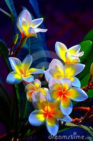 flower486_20141113