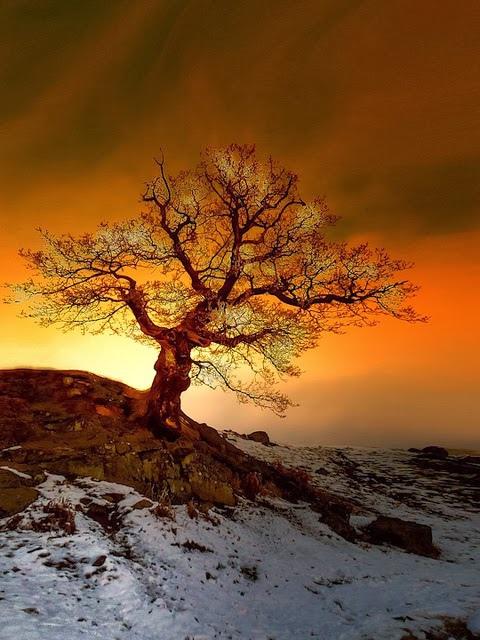 日落138_20140116_Ender Şimşek