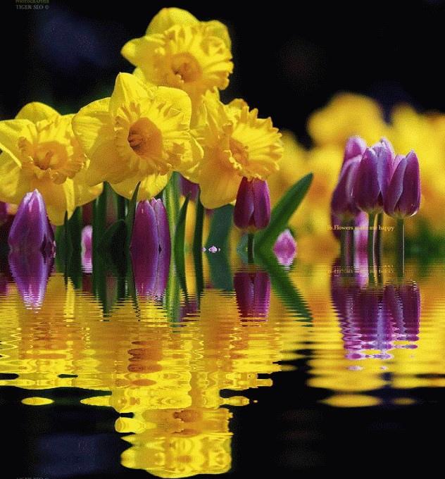 flower300_20140528