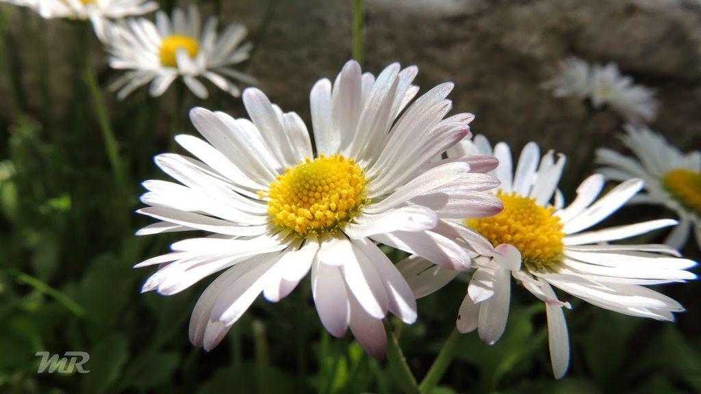 flower303_20140528