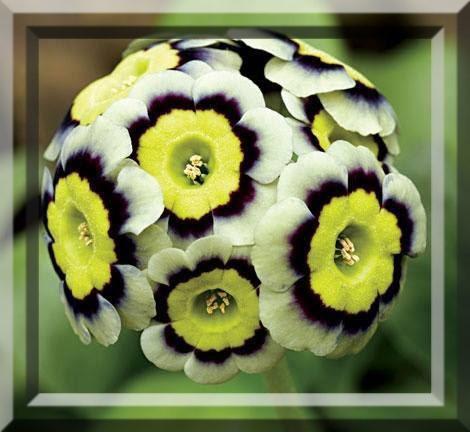 flower301_20140528