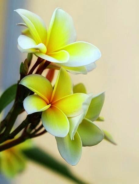flower499_20141124