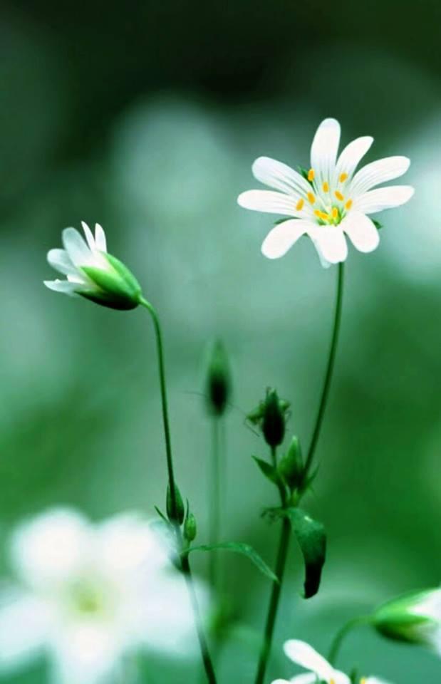flower513_20141207