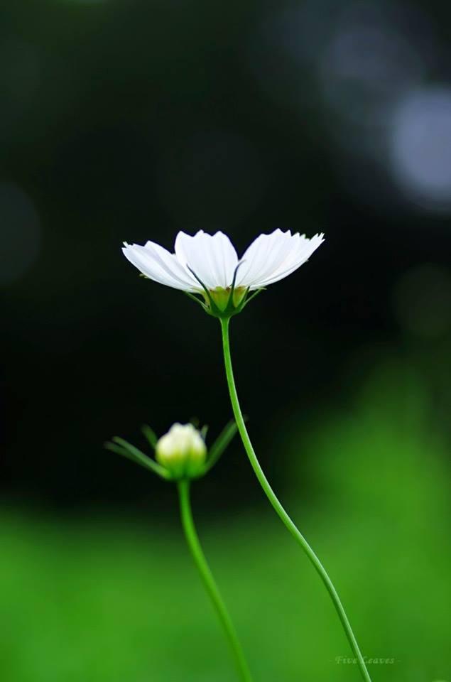 flower521_20141207
