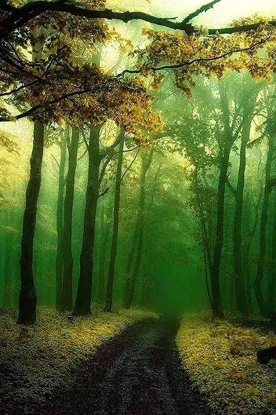 林間小徑2014-0033