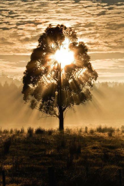 奇樹2014-0078