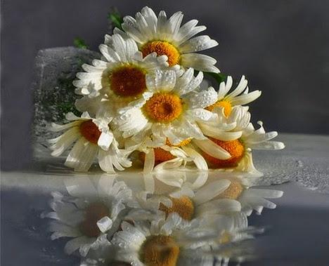 flower392_20140730