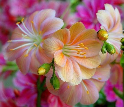 flower692_20150530