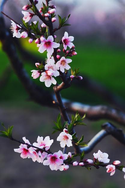 flower572_20150126