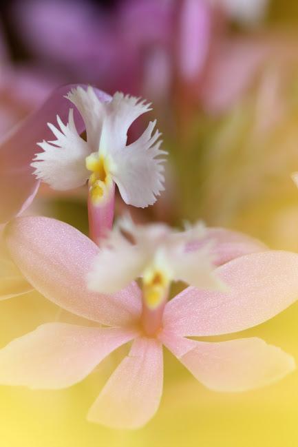 flower571_20150121