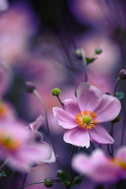 flower693_20150530