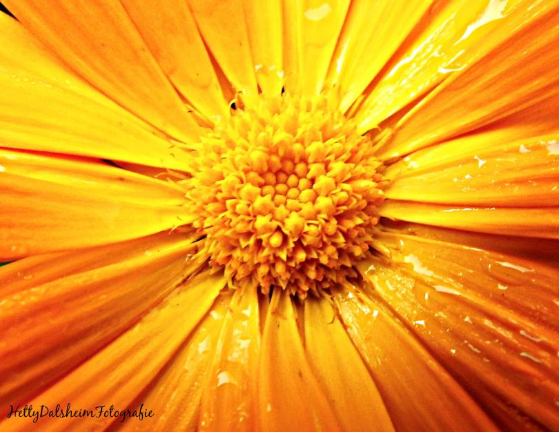 flower782-20150910.jpg