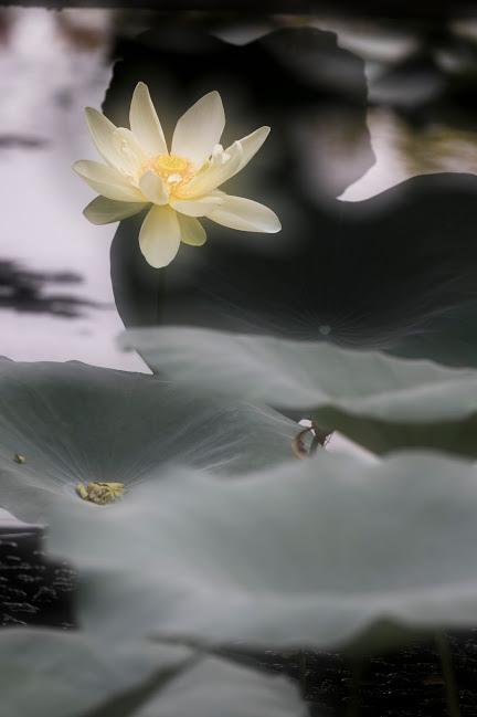 flower813-20151018.jpg