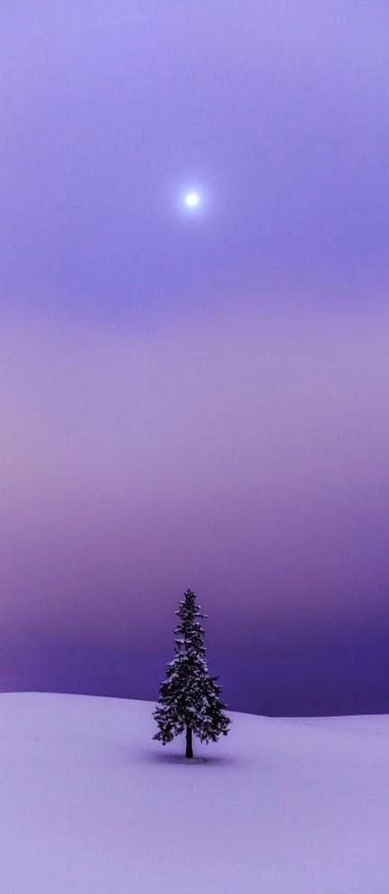 奇樹2015-0003.jpg