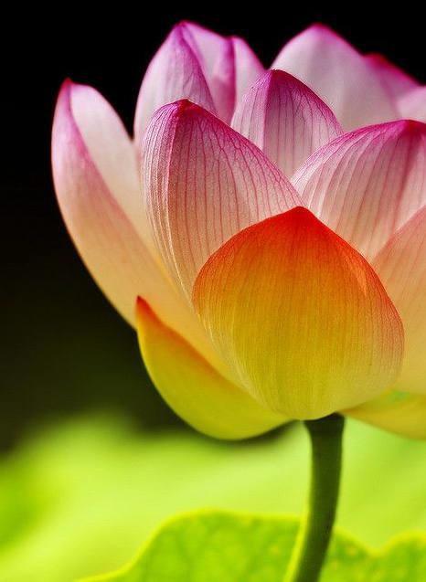 Flower-1081.jpg