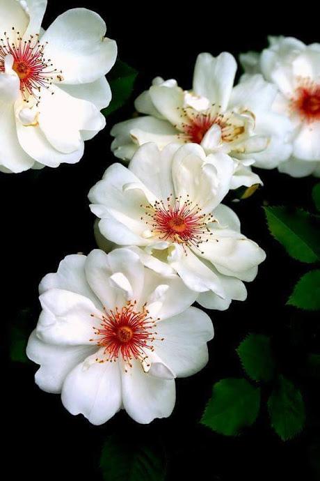 Flower-1084.jpg