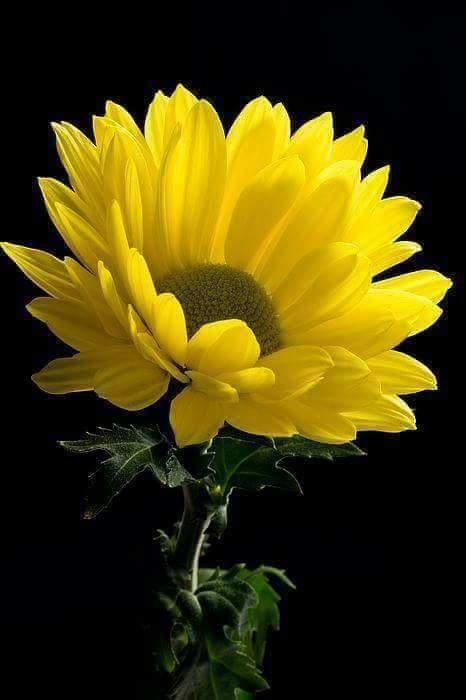 Flower-1398.jpg
