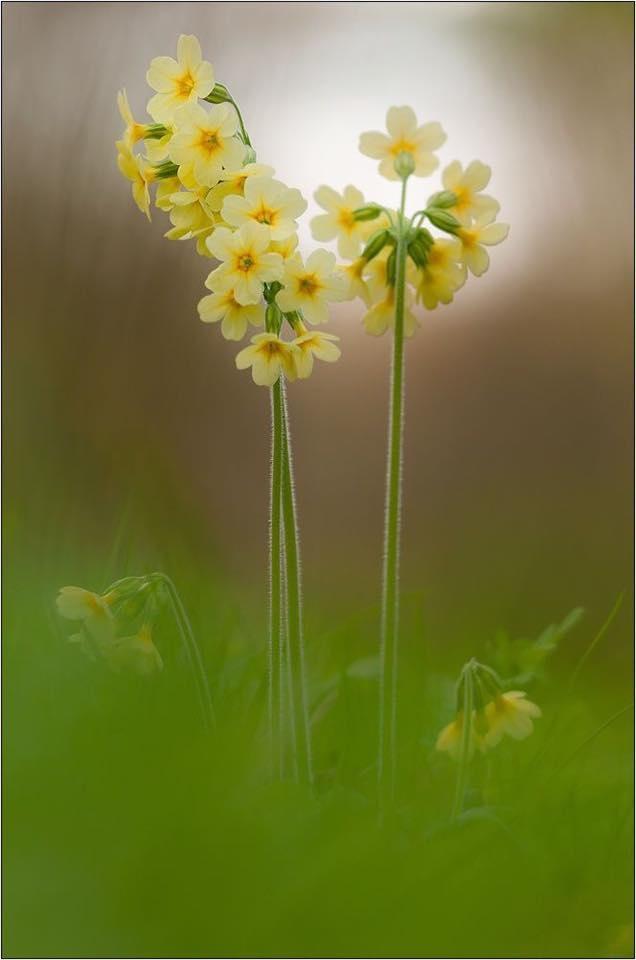 Flower-1413.jpg