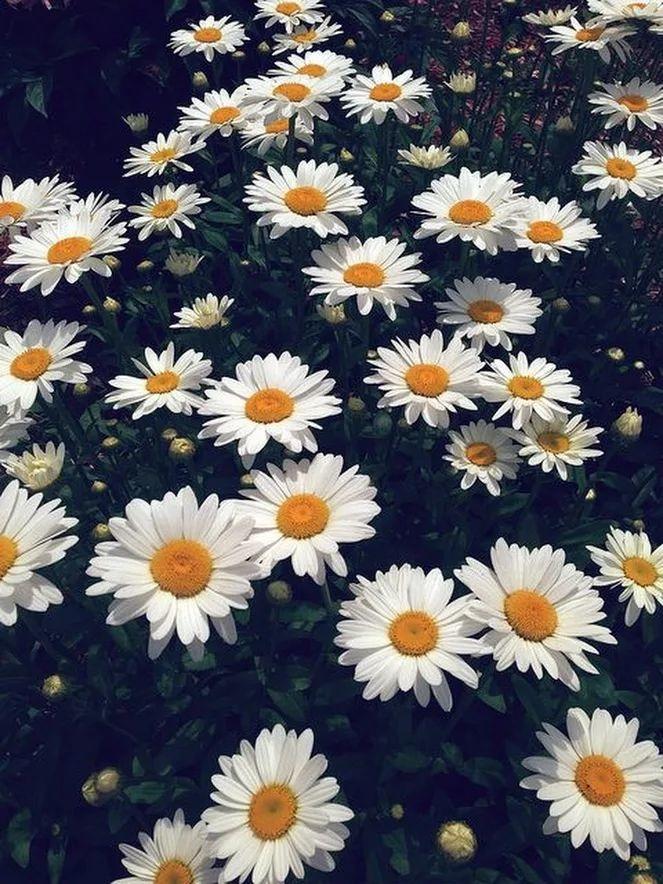 Flower-1414.jpg