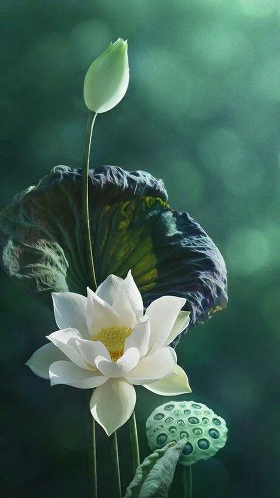 Flower-1415.jpg