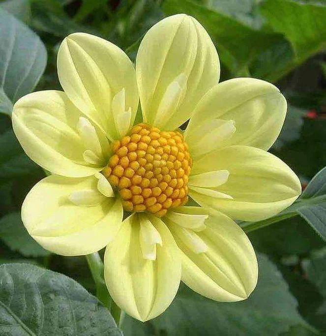 Flower-1417.jpg